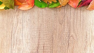 Autumn Wood Google Background