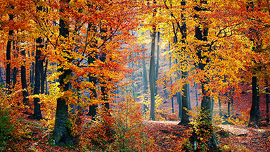 Autumn Woods Google Background