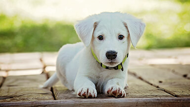 Baby Puppy Google Background