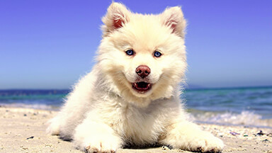 Beach Puppy Chromebook Wallpaper