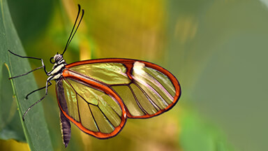 Beautiful Butterfly 4K Google Background