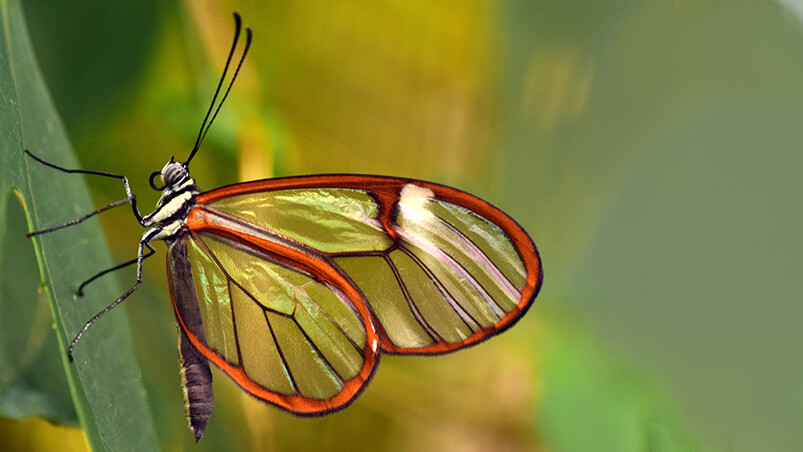 Beautiful Butterfly 4K Chromebook Wallpaper ...