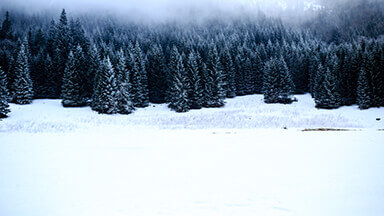 Black Forest Google Background