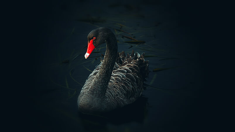 Black Swan Chromebook Wallpaper ...