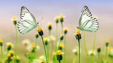 Butterfly Heaven Google Background