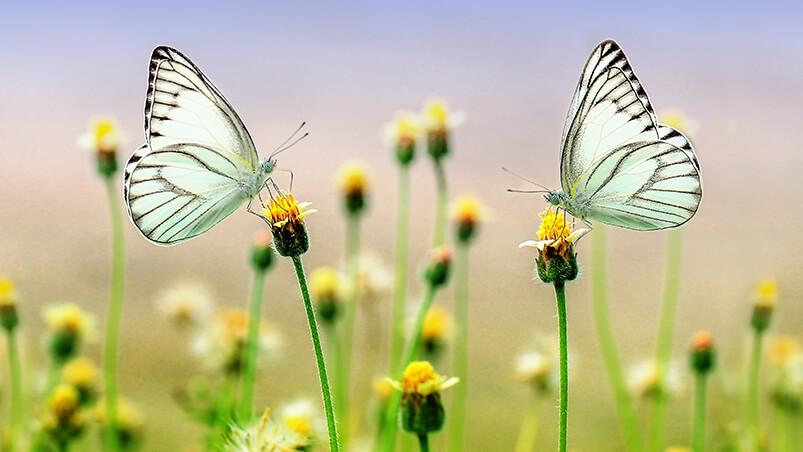 Butterfly Heaven Google Background ...