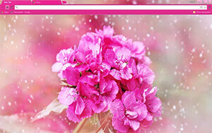 Carnation Flower Chrome Theme