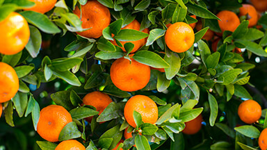 Citrus Fruit Google Background