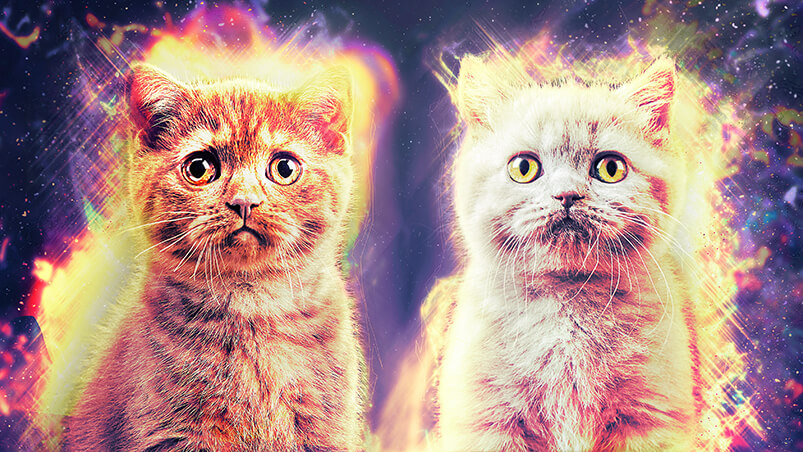 Cosmic Kittens Chromebook Wallpaper ...