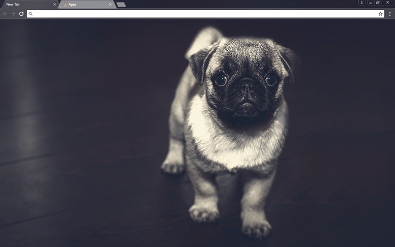 Pug Puppy Google Chrome Theme