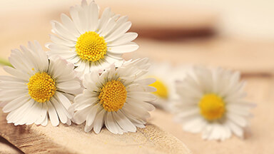 Daisy Days Google Background