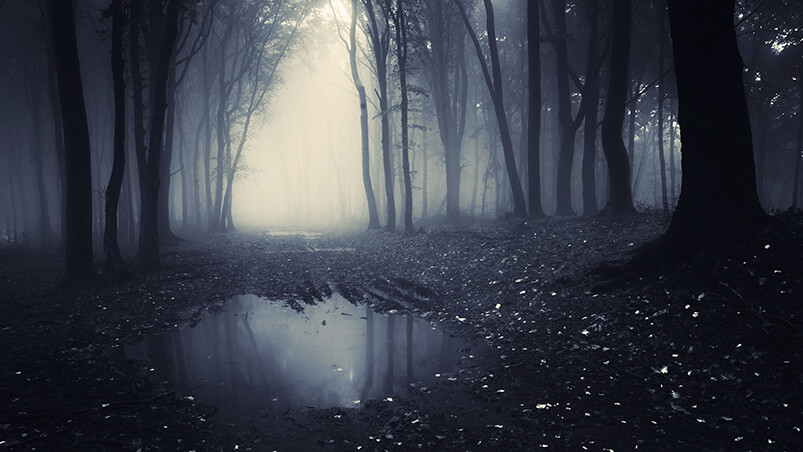Dark Forest Chromebook Wallpaper ...