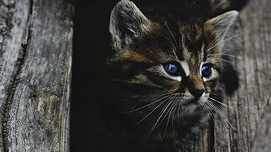 Dark Kitten Chromebook Wallpaper