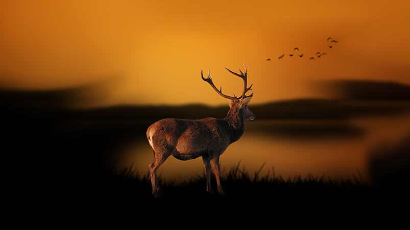 Deer At Dusk Chromebook Wallpaper ...