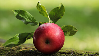 Delicious Red Apple Google Background