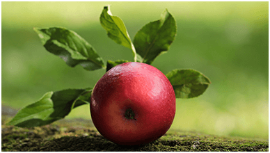 Delicious Red Apple ChromeBook Wallpaper