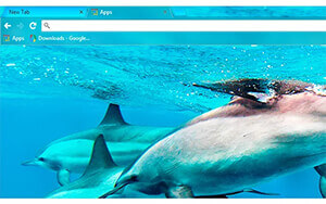 Dolphins Chrome Theme