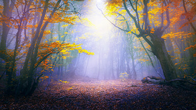 Enchanted Forest Google Background