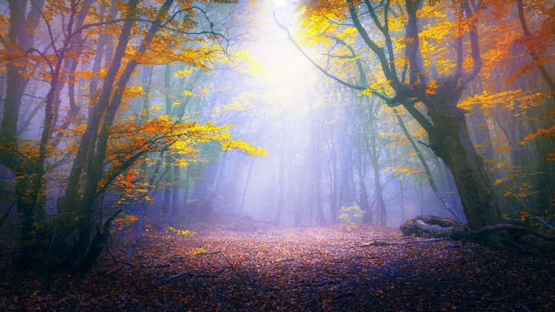 Enchanted Forest Google Background ...