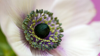 Eye Of The Flower Google Background