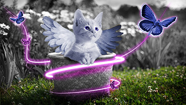 Fairy Kitten Chromebook Wallpaper
