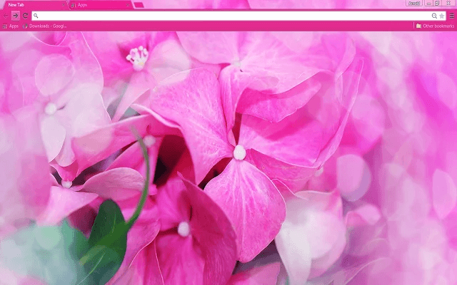 Free Florist Google Chrome Theme