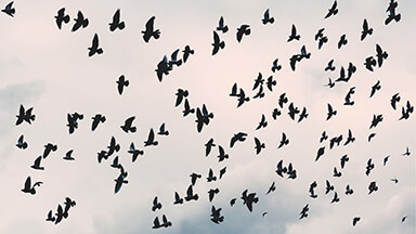 Flying Free Birds Google Background