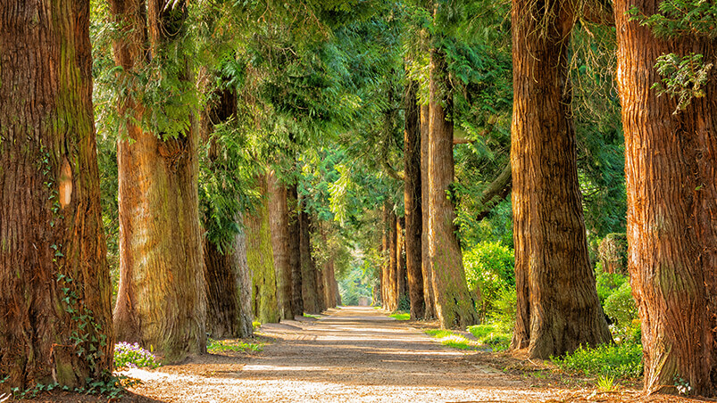 Forest Walkway Google Background ...