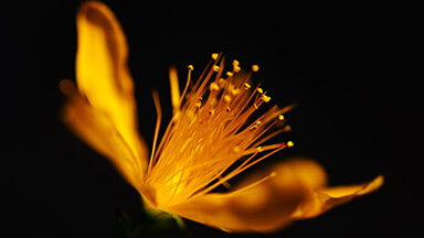 Golden Flower Google Background