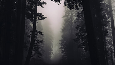 Gothic Forest Google Background
