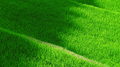 Grassy Terrace Chromebook Wallpaper