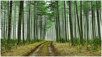 Green Forest Road ChromeBook Wallpaper