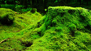 Green Forestry Google Background