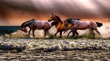 Horses Running Free Google Background