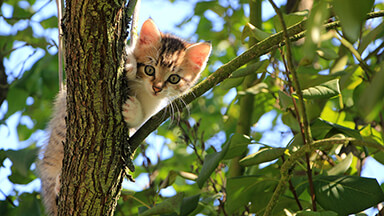 Kitten In A Tree Chromebook Wallpaper