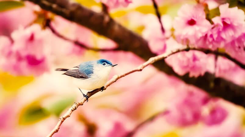 Little Bird Google Background ...