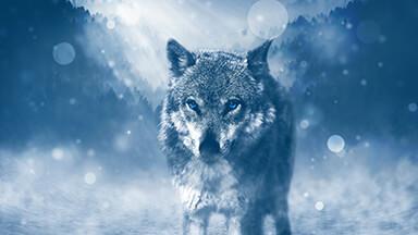 Lone Wolf Google Background