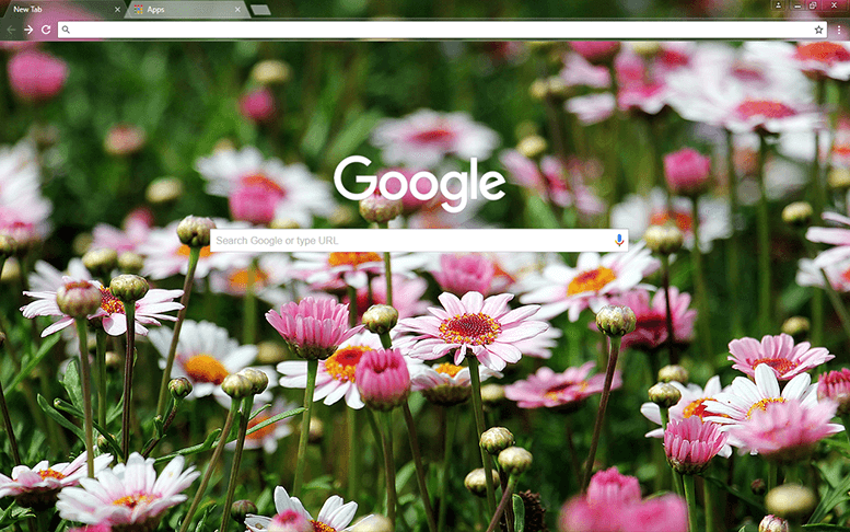 Marguerite Flowers Chrome Theme