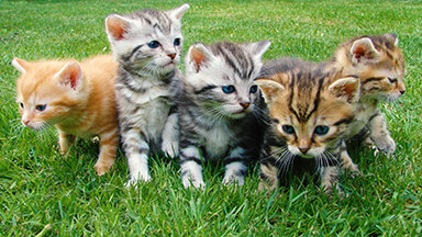 More Kittens Google Background