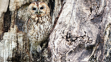 Owl In A Tree Chromebook Wallpaper