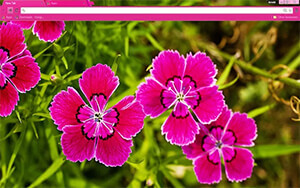 Pink Flowers Chrome Theme