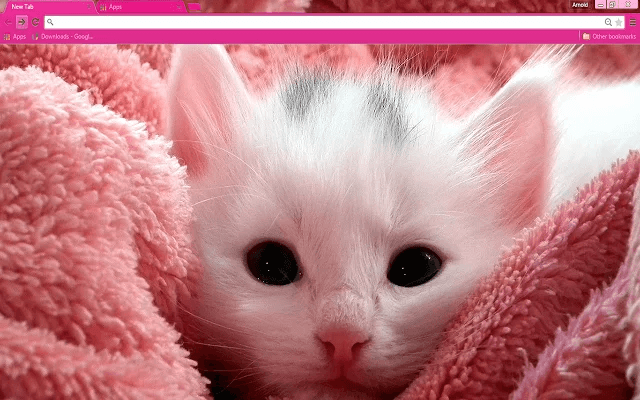 Free Pink Kitten Google Chrome Theme