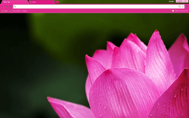 Free Pink Lotus Google Chrome Theme