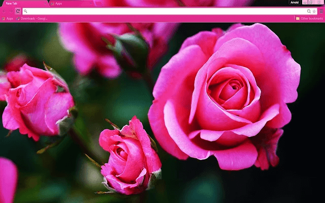 Pink Roses Google Chrome Theme