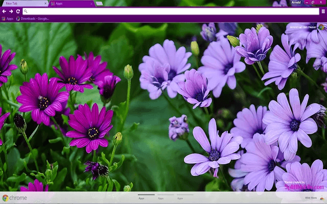 Purple Daisies Google Chrome Theme