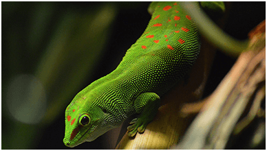 Reptilian Lizard Chromebook Wallpaper