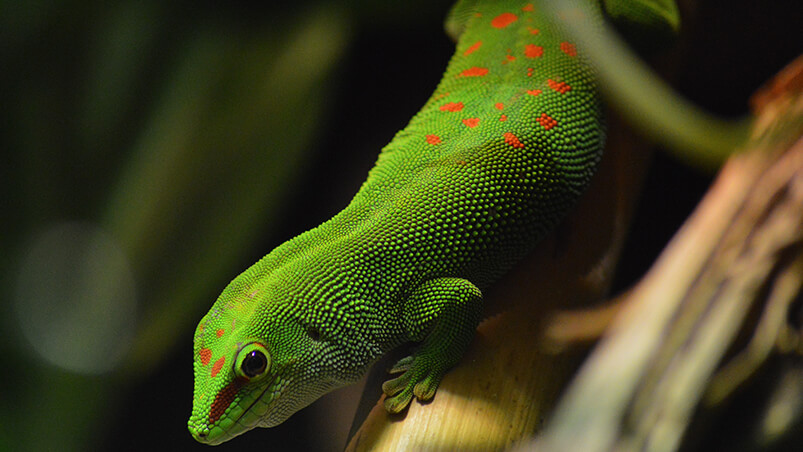 Reptilian Lizard Chromebook Wallpaper ...