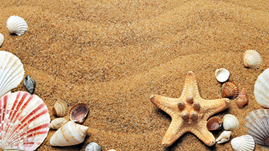 Sea Shells Google Background