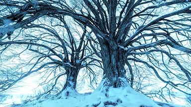 Snowy Blue Trees Google Background