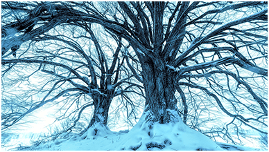 Snowy Blue Trees Chromebook Wallpaper